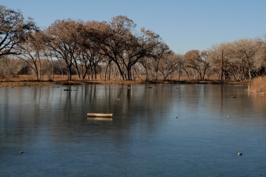 Winter_Ponds_along_Rio_Grande_River_Albuquerque